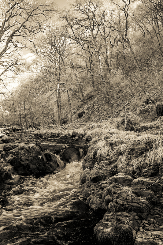Tree lined stream recorded in infra-red in spring time and given a sepia type tone.