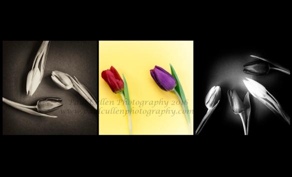 Triptych Tulips