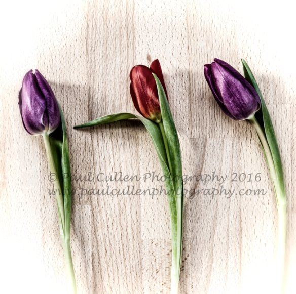 Three Tulips on a wooden board.