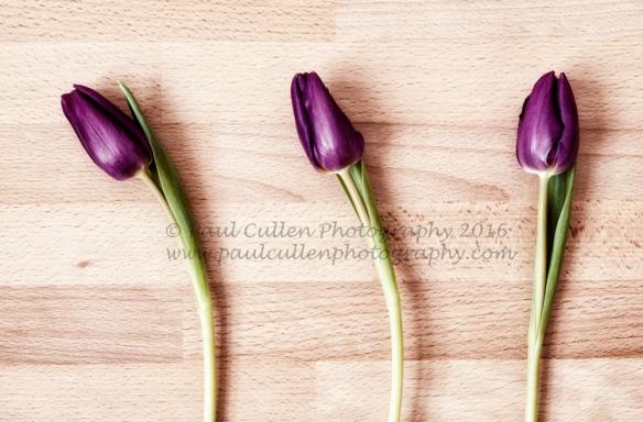 Three purple Tulips.
