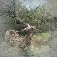 Cracked Deer