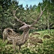 Curly Deer