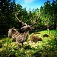 Deer 1 sml